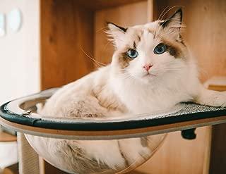 Best cat desk bed Reviews