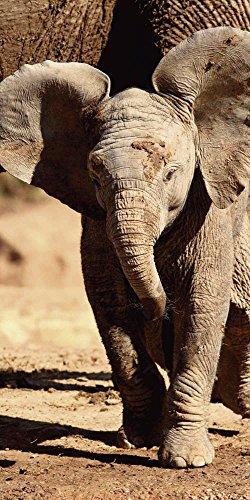 Artland Qualitätsbilder I Glasbilder Deko Glas Bilder 30 x 60 cm Tiere Wildtiere Elefant Foto Braun A6VR Elefantenbaby