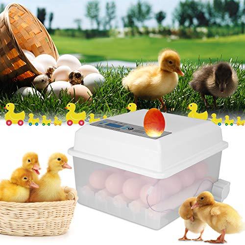 4YANG Incubadora Automatica, Incubadora Volteo Automatico 16 Huevos,Control de Temperatura  Fácil Manipulación Rotación Automática 1 Fregadero, para el Hogar Colegio
