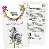 Moldawischer Drachenkopf Samen: Premium Drachenkopf Saatgut für ca. 60x blühende Wildblumen Pflanzen – Schöne Essbare Blumen Samen – Balkon Samen für Bienen Pflanzen – Wildblumen Saatgut von OwnGrown