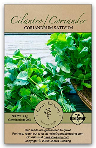 Gaeas Blessing Seeds - Cilantro Seeds - Non-GMO Heirloom Seeds with Easy to Follow Instructions - Leisure Coriander Heirloom - 90% Germination Rate (Single Pack)