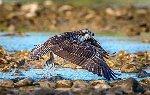 Tilt-Shift Lens Fotografie Van Grijze Vogel Die Bovenop Grijze Rotsen Vliegt Voor Kinderen Volwassenen Legpuzzel - 1000 Stukjes-