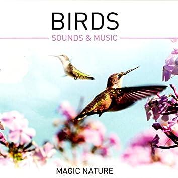 Birds - Sounds & Music (Gapless)