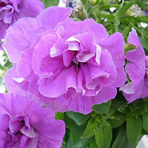 200 pcs/sac double Petunia Graines Balcon Oblique Petunia pot de fleurs Graines Bonsai Pétunia multi-couleurs végétales pour jardin Rouge