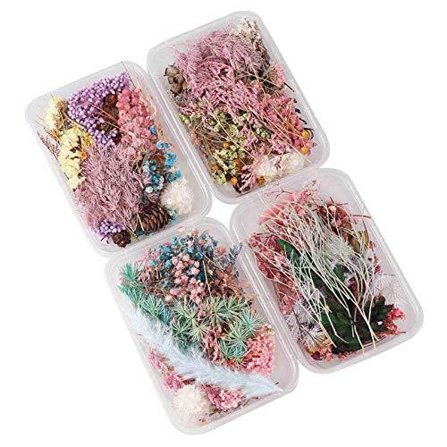 whelsara Flores secas más de 10 Tipos de Flores secas Naturales mezcladas Paquete de Flores Mixtas 1 Caja para joyería de Resina epoxi para Manualidades y decoración del hogar Beneficial