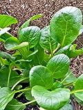 Komatsuna (Brassica rapa var. perviridis) 300 Samen Japanischer Senfspinat