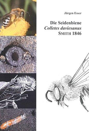 Die Seidenbiene Colletes daviesanus Smith 1846: Lebensstrategie einer spezialisierten Wildbiene