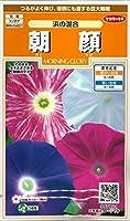 サカタのタネ 花の種 朝顔 浜の混合 小袋