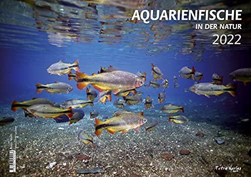 Kalender AQUARIUM/AQUARIENFISCHE (in der Natur) 2022 - Großformat 29,7 x 42 cm (A3) - 12 Fotografien - 1 Titelbild mit edlem separatem Folienblatt