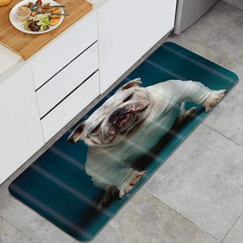 ELIENONO Alfombrillas de Cocina Antideslizantes Lavables,Animales Mascota Perros Bulldog Británico Mascota,Felpudos Cocina Dormitorio Baño Alfombrilla de Poliéster
