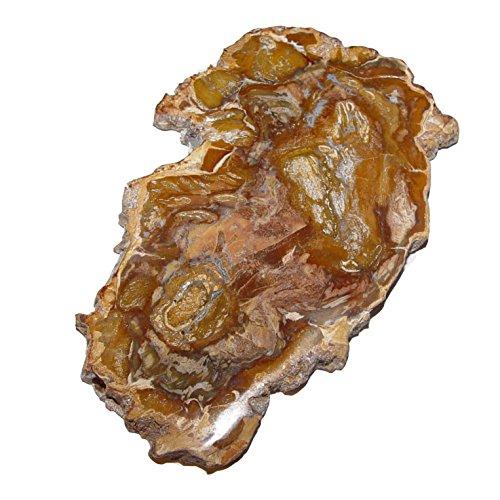 Baumscheibe versteinerte Holz Scheibe aus Madagaskar ca. 100-120 mm ca. 150 Millionen Jahre alt.(4683)