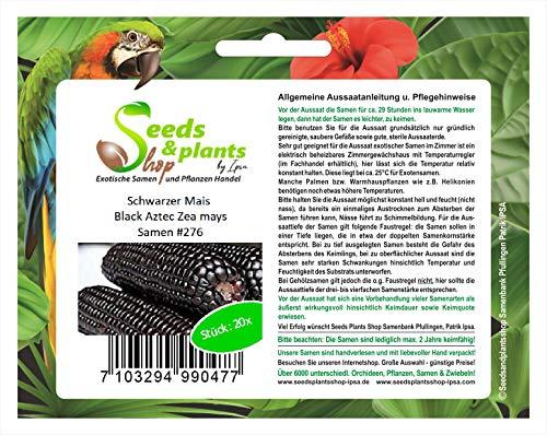 Stk - 20x Schwarzer Mais Black Aztec Zea mays Getreide Pflanzen - Samen #276 - Seeds Plants Shop Samenbank Pfullingen Patrik Ipsa