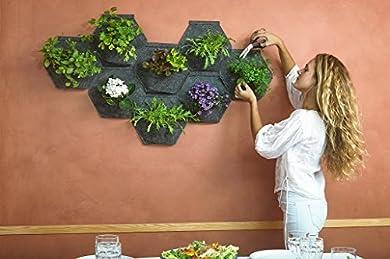 Foto di MH Giardino verticale, organico, per far crescere le piante sulla parete