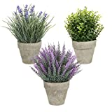 Künstliche Pflanzen, künstliches Mini-Grünpflanzen Lavendel 3 Stück, zum Dekorieren von Schreibtischen, Schlafzimmern, Küchen, Schreibtischen, Gartendekorationen und künstlichen Pflanzen in Räumen