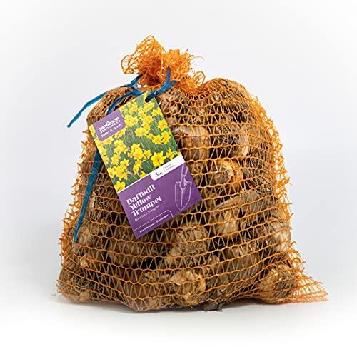 Jamieson Brothers® Yellow Trumpet Daffodil Bulbs 5kg Bag