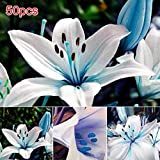 Fishyu 50Pcs / Bag Blue Rare Lily Bulbos Seeds Planting...