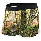 Web--ster Männer's Boxershorts, Misty Autumn Woodland und Stream bei Golitha Falls auf Bodmin Moor in Cornwall Größe XL