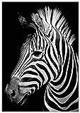 Panorama Poster Cebra 50x70cm - Impreso en Papel 250gr - Poster de Animales - Cuadros de Animales Decorativos - Cuadros de Salón Modernos - Cuadros Decoración Dormitorio