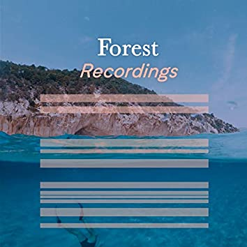 Calm Ambient Forest Recordings