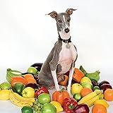Excellent Italian Greyhound [Explicit]