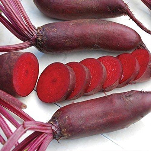 "Portal Cool 25 - Samen: Cylindra-Rübensamen (organisch) - 6-7""lange, dunkelrote, karottenförmige Rüben!Süss!"
