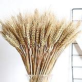 Natürliche weizen deko getrocknete blumen Deko-Grasbouquet Für blumenstrauß, Requisiten, künstliche Blumen und für Heim- oder Partydekorationen, 100 x trockenes Deko-Gras - 2