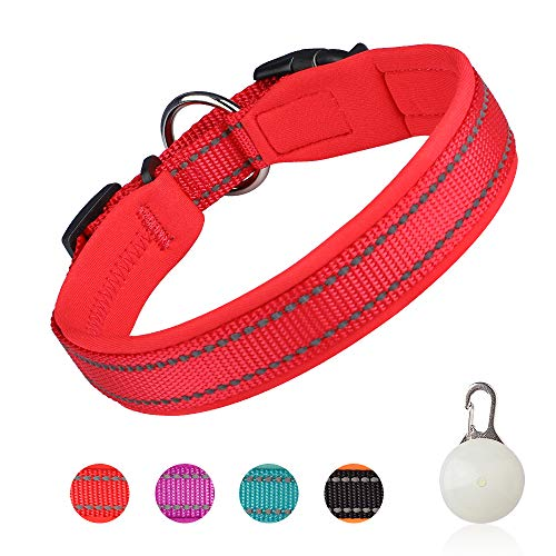 Pumila Einstellbare Hundehalsband Nylon Reflektierend Neopren Gepolstert Verstellbar Halsband Große Kleine Hundehalsbänder Leichtes Welpenhalsband mit Hundelicht zum Laufen/Gehen/Training-Rot-M