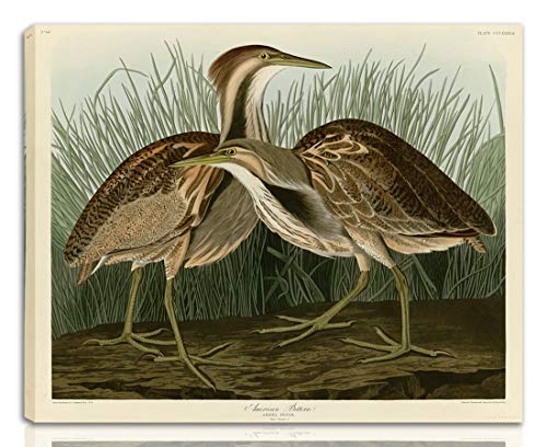 Berkin Arts John James Audubon Gedehnt Giclee Auf Leinwand drucken-Berühmte Gemälde Kunst Poster-Reproduktion Wand Dekoration Fertig zum Aufhängen(Amerikanische Rohrdommel)#NK