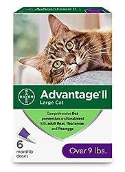 Amazon Cat Ears Clasic Ii