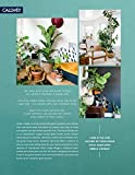 Zoom IMG-1 urban jungle living and styling