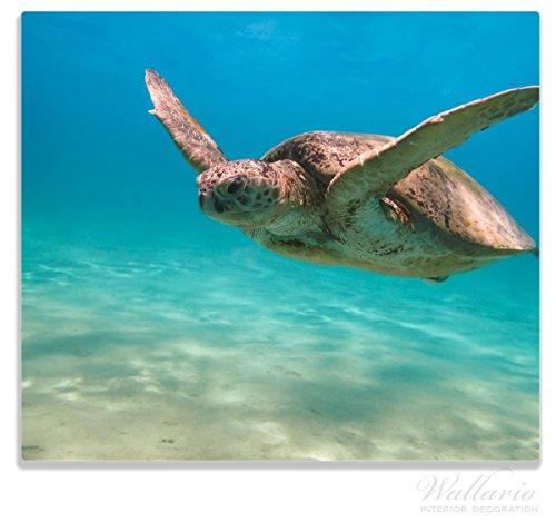 Wallario Herdabdeckplatte/Spritzschutz aus Glas, 1-teilig, 60x52cm, für Ceran- und Induktionsherde, Meeresschildkröte