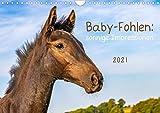 Baby-Fohlen: sonnige Impressionen (Wandkalender 2021 DIN A4 quer)