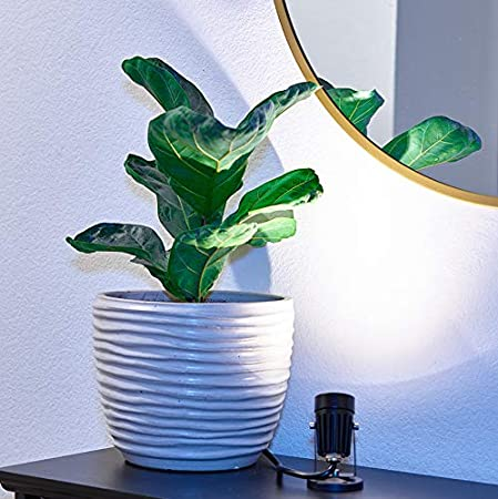 LED Indoor Spot Light for Plants /& Accent Lighting Warm White with Base Decorative 110V Lamp with Plug for Indoor Wall 3W LED Uplight /& Down Spotlight for Potted Plants Home /& Living Room