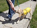 How Puppies Train To Become Guide Dogs