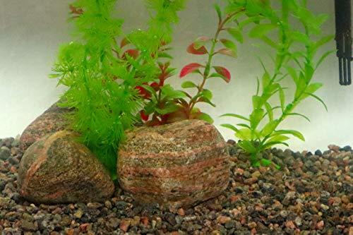 "1/4"" Granite Mini Pea Gravel, 5lb Bag - Decorative Natural granitic Gneiss Gravel for Aquariums, Landscaping, Vase Fillers, Plants, Fairy Gardens, Bonsai."