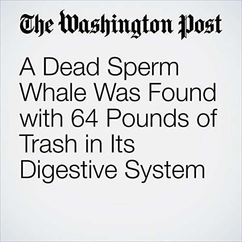 A Dead Sperm Whale Was Found with 64 Pounds of Trash in Its Digestive System copertina