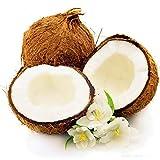 DaDago 10 Teile/Beutel Kokospalme Samen Mehrjährige Bonsai Saftige Obst Pflanzen Für Haus Und Garten Pflanzen