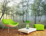 Papel Pintado Pared Dormitorio Fotomurales 3D Paisaje De Niebla De La Mañana Del Bosque Verde Papel Tapiz Fotografico 3D Murales Decorativos,350x250cm