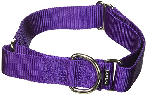 PetSafe Martingale Collar 1