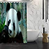 None brand Panda Duschvorhang mit Haken Duschvorhang aus Polyestergewebe für Badezimmer Wasserdicht-180 cm x 220 cm