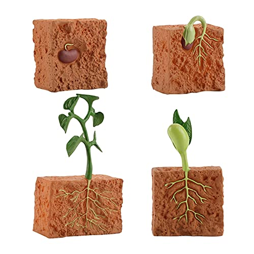 POHOVE Pflanzenwachstumszyklus-Modell, Pflanzen-Lebenszyklus, pädagogisches Evolution-Spielzeug, Pflanzenwachstumsstufe, Modell, Spielzeug, Lernspielzeug, kognitives Spielzeug