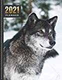 2021 Planner: Wolf in Snow / Daily Weekly Monthly / Dated 8.5x11 Life Organizer Notebook / 12 Month Calendar - January to December / Full Size Book ... Cover/ Cute Christmas or New Years Gift