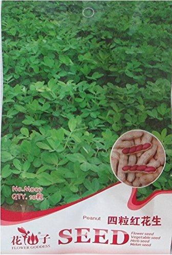 10 graines / paquet, chinois 4 pièces d'arachide Graines dans un Shell, Peau Rouge organique Rare Heirloom arachide, le taux de germination de 95%