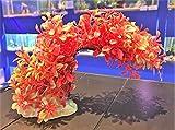 Mezzaluna Gifts Colorido adorno decorativo para acuario (planta de Bendy roja y verde, 15 x 26 x 8 cm)