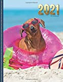2021 Planner: Funny Dachshund Dog at Blue Ocean Beach / Daily Weekly Monthly / Dated 8.5x11 Life Organizer Notebook / 12 Month Calendar - January to ... Cover/ Cute Christmas or New Years Gift