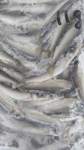 冷凍 国産 ( 滋賀県 ) 若鮎 ( 大 ) 1kg ( 約90尾 ) 業務用 稚 あゆ 鮎 小