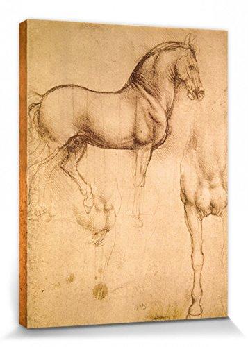 1art1 Leonardo Da Vinci - Estudio De Un Caballo, 1493-1494 Cuadro, Lienzo Montado sobre Bastidor (40 x 30cm)