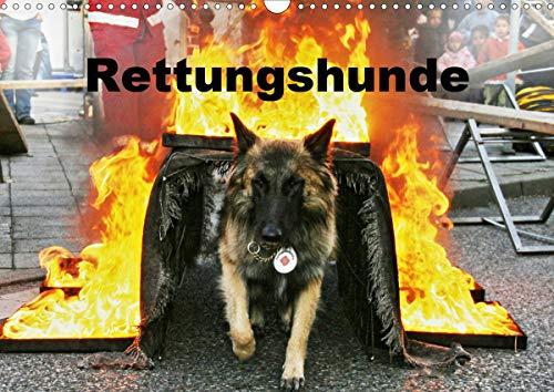 Rettungshunde (Wandkalender 2021 DIN A3 quer)