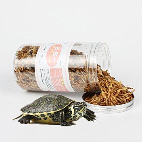 Marine Turtle Food
