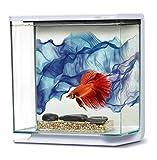 Marina Kit Aquarium pour Betta Motif Voile Bleu 3 L